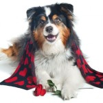 Happy Valentine's Dog