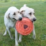 Puppy Love: National Puppy Day