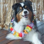 Aloha: May Day is Lei Day in Hawaii