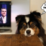 Politics/Shmolitics: A Dog's Eye View