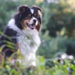 The Dog Days of Summer — I Love 'Em