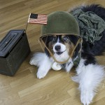 Semper Fido: A Paws Up for Pets for Patriots