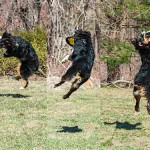 Air Dog: Tips for Dog-Disc Interactions