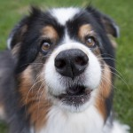 Dog Myths Decrypted: The Nose Knows
