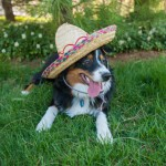 Cinco de Mayo is Nearly Here