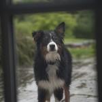 Rainy Day Dog