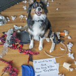 Pet-Shaming — It's My Turn