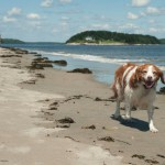 Life's a Beach for Bowser…and friends