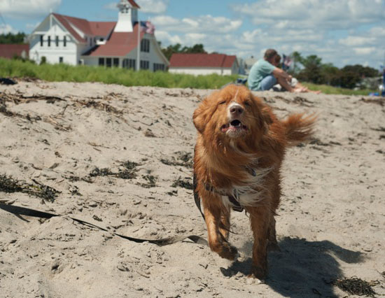 Dogs of Popham Beach Maine