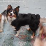 Pup-ularity: My Best Week So Far!