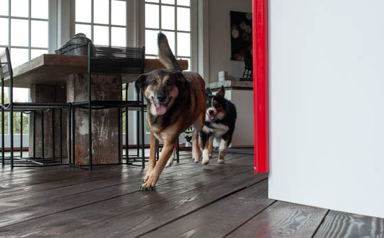 Cassidy Chasing Rusty around the Kitchen, photo by Tom Grotta