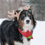 Woofington Wishes You the Wonders of the Season!!