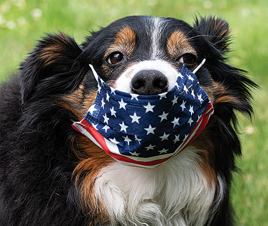 Cassidy 4th of July Mask Wearing Dog
