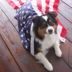 Yankee Doodle Dog: Happy Fourth of July!