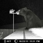 My Top 5 Animal Stories of 2011