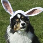 In My Easter Bun-net!