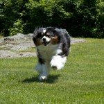Catch Me if You Can!!