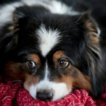 Depression in Dogs: Does Bowser Have the Blues?