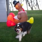 I Do the Turkey Dance!!
