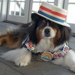 Pet Politics: Vote Cat/Vote Dog. Just Vote!