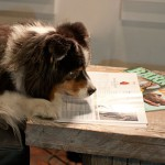 Dogs Who Read, Read Bark!