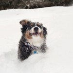 Finding Nemo: Tales of a Snow Dog