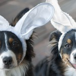 The Ears Have It: My Efforts to Hasten Spring