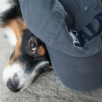 Frat Dog: The 25 Worst Dogs You Met in College