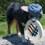 Have a Fab 4th of July!!