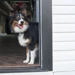 Doggy Discourse: Keeping Dog-Eye