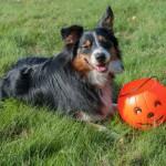 I Get My Pumpkin On…Literally!