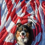 Have a Doggone Good Fourth of July!