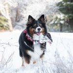 Woofington: I love a good snow day!!